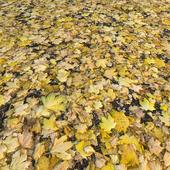 Autumn Leaves_1