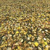 Autumn Leaves_2