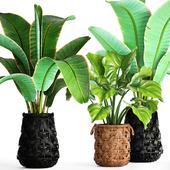 Коллекция растений 96.