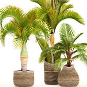 Коллекция растений 97.Tropical plants.