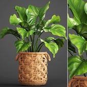 Тропическое растение.