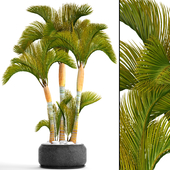 Коллекция растений 99.