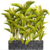 Коллекция растений 100.