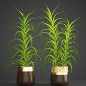 Коллекция растений 105. Aloe vera