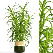 Коллекция растений 106.