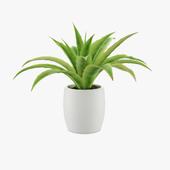 Flower in pot