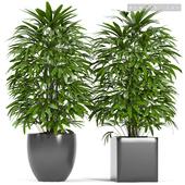 PLANTS 147