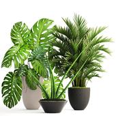 Коллекция растений 124.