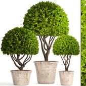 Коллекция растений 126.