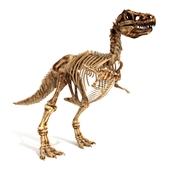 Skeleton of the Dinosaur Trex