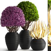 Коллекция растений 129.