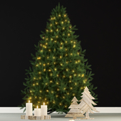 Plants collection 70 christmas tree