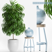 PLANTS 153