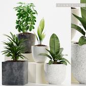 PLANTS 165