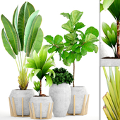 Collection of plants 147.Tropical plant