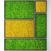 Vertical garden 10. Stabilized moss