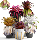 Collection of plants 153. Bromelia
