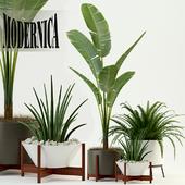Plants collection 76 Modernica pots
