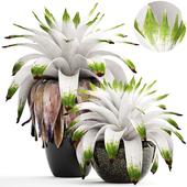 Collection of plants 156. Bromelia