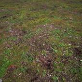Ground_Forest_Grass