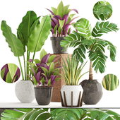 Collection of plants 173.