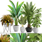 Collection of plants 175.