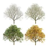 Apple tree 3 season