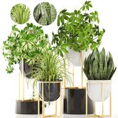 Коллекция растений 183.