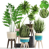 Коллекция растений 184.