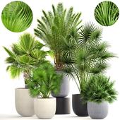 Коллекция растений 185.