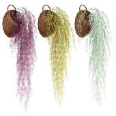 Свисающие растения в плетеных горшках