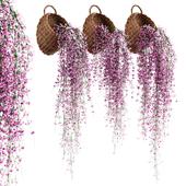 Свисающие растения в плетеных горшках v2