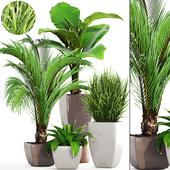 Коллекция растений 189.