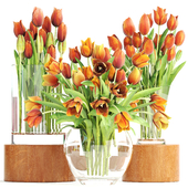 Collection of flowers 3. Tulips.