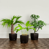 PLANTS 22