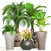 Коллекция растений 191.
