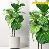 PLANTS 181