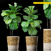 PLANTS 178