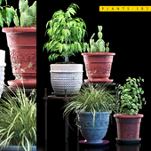 PLANTS 182