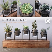 Succulents_set