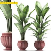 PLANTS 184