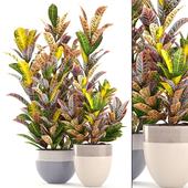 Коллекция растений 204.