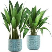 Коллекция растений 206.