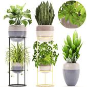 Коллекция растений 209.