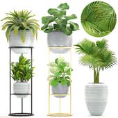 Коллекция растений 210.