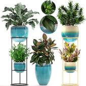 Коллекция растений 211.