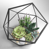 Florarium of icosahedron mini