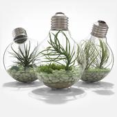 Florarium in a light bulb