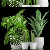 Plant 47