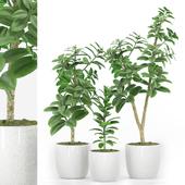 Plant 48